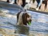 2017-10-14_Hundeschwimmen_Bild-134