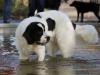 2017-10-14_Hundeschwimmen_Bild-139