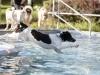 2017-10-14_Hundeschwimmen_Bild-148