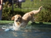 2017-10-14_Hundeschwimmen_Bild-150
