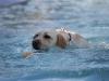 2017-10-14_Hundeschwimmen_Bild-154