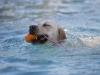 2017-10-14_Hundeschwimmen_Bild-155