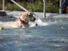 2017-10-14_Hundeschwimmen_Bild-158