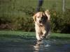 2017-10-14_Hundeschwimmen_Bild-163