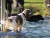 2017-10-14_Hundeschwimmen_Bild-166