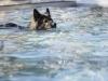 2017-10-14_Hundeschwimmen_Bild-170