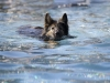2017-10-14_Hundeschwimmen_Bild-171