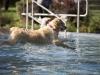 2017-10-14_Hundeschwimmen_Bild-172