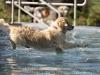 2017-10-14_Hundeschwimmen_Bild-173