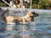 2017-10-14_Hundeschwimmen_Bild-174