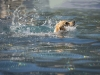2017-10-14_Hundeschwimmen_Bild-175