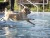 2017-10-14_Hundeschwimmen_Bild-176