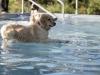 2017-10-14_Hundeschwimmen_Bild-177