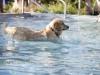 2017-10-14_Hundeschwimmen_Bild-178