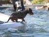2017-10-14_Hundeschwimmen_Bild-179