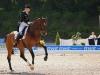Dressur-Pferde-Pferdesport-Balve-Optimum-Viereck