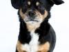 Studiofotografie-Hunde-im-Studio-Tierfotografie